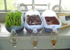 A great experiment to illustrate soil erosion! This simple experiment shows the importance of trees as a part of our environment. The water that runs through soil with vegetation (left corner), comes out clear, while the other two without vegetation have muddy water.