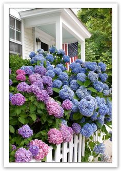 Gorgeous Hydrangeas.  Snowball bushes :)  Reminds me of grandma's house.