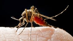 How to avoid chikungunya virus