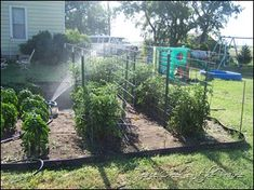 Frugal Heavy Duty Tomato Cages