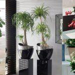 14 Best Indoor Succulents To Grow At Home