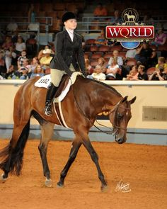 Only a Blue, Bay Quarter Horse Mare. Hope Bunny and I can do this one day! Hunter Under Saddle, Broken Horses, Hunt Seat, Horse Showing, Pinto Horses, Horse Training Tips, Quarter Horses, Hunter Jumper, Horse Saddles