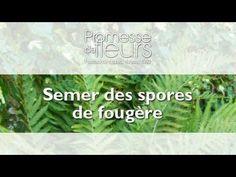 Promesse de Fleurs - YouTube Comment Planter, Planters, Blog, Gardens, Landscape Fabric, Fresh, Yard, Chart, Planter Boxes