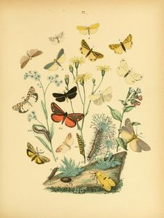 European butterflies and moths ... Based upon B...