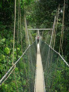 Canopy walkway - Taman Negara National Park, Malaysia
