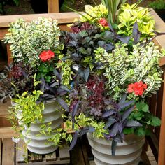 A lovely garden can be created from a single container with various plants working together to create an eye-catching piece.