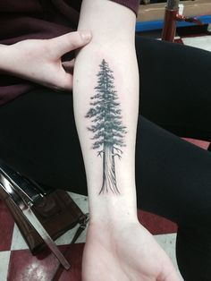 Sequoia sempervirens (Coast Redwood) #tattoo done by Christina Ramos at True Tattoo in Hollywood. tree tattoos, redwood tattoo, sequoia tattoo, green, baum tattoo, families, coast redwood, sequoia semperviren, calves