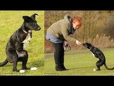 Meet the dog who thinks she's a kangaroo-Roo the two-legged dog