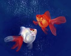 This goldfish art is a digital painting of two Ryukin goldfish swimming together.  Ryukin goldfish are known for their dorsal humps and deep round bodies. This artwork would look nice in a fish room or above an aquarium, or would be great for any goldfish lover!  Artwork by Angela Murdock