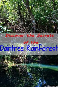 In far North Queensland lies the Daintree Rainforest. One of the oldest rainforests in the world and home to a wealth of plants and animals that could kill you, here's why it should be your next adventure Australia Honeymoon, Coast Australia, Western Australia, Australia Travel, Visit Australia, Daintree Rainforest, Single Travel, Solo Travel, Travel Tips