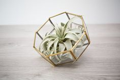 Air Plant Terrarium Upcycled from Vintage Lampshade / Geometric Octagon Gold Metal and Glass Succulent Plant Holder CAD) by riceandpotato Oak Street, Air Plant Terrarium, Plant Holders, Air Plants, Planting Succulents, Diy Home Decor, Upcycle, Metal, Glass