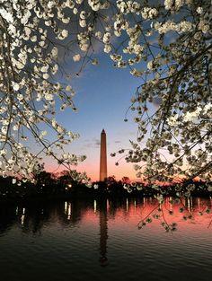 National Cherry Blossom Festival in DC.