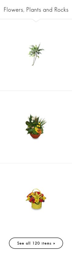 """""""Flowers, Plants and Rocks"""" by wackyworkshop ❤ liked on Polyvore featuring plants, trees, palme, fillers, effects, accessories, flowers, home, home decor and floral decor"""