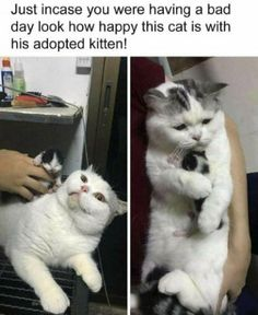 Stupidly Funny Posts For Maximum Day-Brightening Memes) - Memebase - Funny M.,Funny, Funny Categories Fuunyy Stupidly Funny Posts For Maximum Day-Brightening Memes) - Memebase - Funny Memes Source by midgitbrat. Funny Cute Cats, Funny Animal Memes, Funny Animal Pictures, Cute Funny Animals, Cute Pictures, Funny Memes, Funny Videos, Chien Golden Retriever, Hilarious Memes