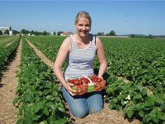Gute Nachrichten für #Erdbeer-Fans: Im Südkreis hat die Ernte begonnen! (Foto: Carolin Hlawatsch) Alles Weitere lest Ihr hier: www.noz.de/64329135