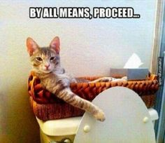 Cat, toilet, funny