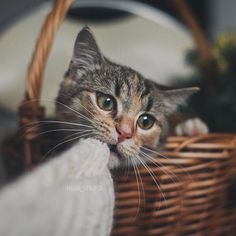 Cute cat - country living
