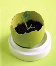 Eggshell seedling sprouter tutorial