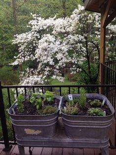 Herb garden in vintage wash tubs...