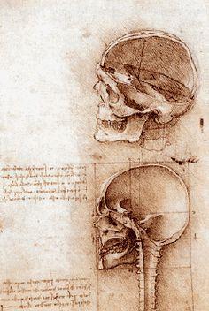 Dessins_anatomiques_de_deux_cranes_-_1489 Dessin à la plume sur pierre noire Royal Library Windsor