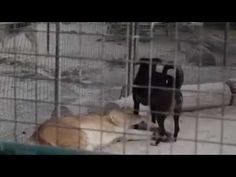One brave brave dog!!!