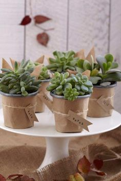 DIY - Succulents as name tags!