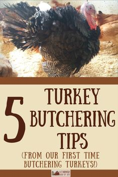 After our first time butchering turkeys, I've come up with five turkey butchering tips to share. And all of them focus on one thing: turkeys. Meat Chickens, Raising Chickens, Chickens Backyard, Urban Chickens, Backyard Poultry, Backyard Farming, Turkey Farm, Wild Turkey, Turkey Chicken