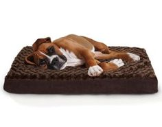 Help your dog get relief from aching joints with the FurHaven Ultra Plush Deluxe Memory Foam Dog Bed . This orthopedic-grade pet bed evenly distributes. Dog Beds For Small Dogs, Cool Dog Beds, Large Dogs, Diy Dog Bed, Tim Beta, Pet Beds, Doge, Dog Cat, Big Dogs