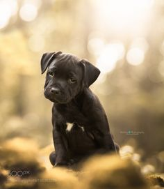 Sweet Puppy by monoafotografie #animals #animal #pet #pets #animales #animallovers #photooftheday #amazing #picoftheday