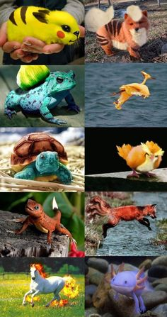 Real pokemon?