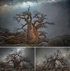 Top photograph, Vela. In the bottom left, Octans, and in the bottom right, Hydra.