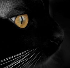 Black cats. - Click image to find more Outdoors Pinterest pins