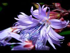 Flores Exoticas III - YouTube