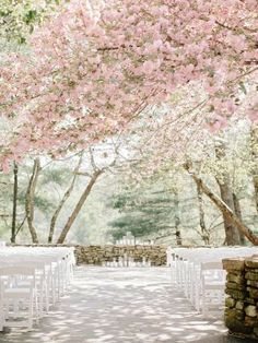 Wedding Ceremony under the cherry blossoms. What is more romantic than that?