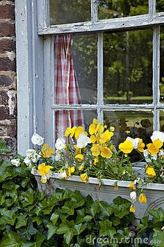 Rustic window with planter box by Judy Kennamer on Dreamstime
