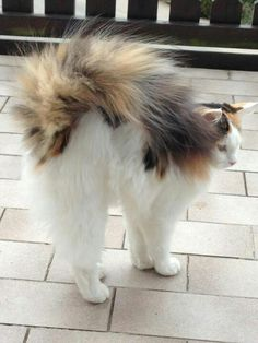 Fluffy Tail.