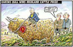 2013-10-04 express Highland Cattle, Horse Racing, British Royals, Corgi, Royalty, Cartoon, History, Pink, Royals