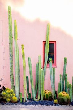 Southwestern Style Garden Design Ideas Have you ever really thought about how many people see the outside of your home? Cacti And Succulents, Cactus Plants, Cactus E Suculentas, Photo Deco, Cactus Art, Indoor Plants, Indoor Cactus, Picture Wall, Wall Collage
