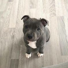k mentions J'aime, 272 commentaires - Pitbulls ❤️ Dogs ❤️ Puppy . k mentions J'aime, 272 commentaires - Pitbulls ❤️ Dogs ❤️ Puppy . k mentions J'aime, 272 commentaires - Pitbulls ❤️ Dogs ❤️ Puppy . Cute Dogs And Puppies, Baby Dogs, Doggies, Pet Dogs, Dog Cat, Cute Little Animals, Cute Funny Animals, Beautiful Dogs, Animals Beautiful