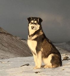 Found this majestic dog while hiking in Kashmir India. http://ift.tt/2lhzvdo