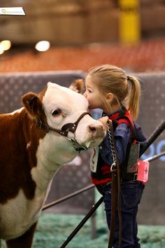 Show Cattle Life. Animals For Kids, Animals And Pets, Baby Animals, Cute Animals, Cute Kids, Cute Babies, Show Cows, Farm Kids, Show Cattle