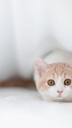 cute little fella