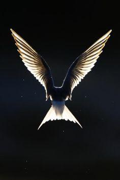 Like an Angel  by Jari Heikkinen