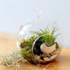 Hanging globe terrarium project with sedum, moss and an air plant in a seashell diy