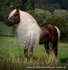 Beautiful mane on this horse
