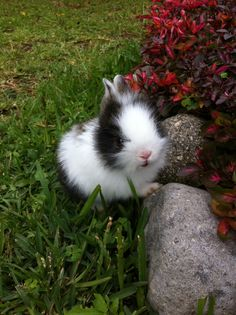 Small black and white Bunny