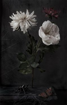 Flora Nova (photo: Paul Kilsby) very dark, sad, neglected kind of photography. Not usually my style at all, but something about this one is nice. Gothic Flowers, Vintage Flowers, Dark Photography, Floral Photography, Surrealism Photography, Art Floral, Flower Arrangements Simple, Still Life Flowers, Hand Flowers