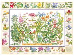 Good Nature - Native Wildflowers poster by award winning artist John C. Pitcher