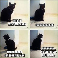 pictures of funny animals with captions | animal pictures with captions, lolcats, dog went missing