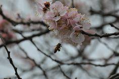 Spring has Sprung!!